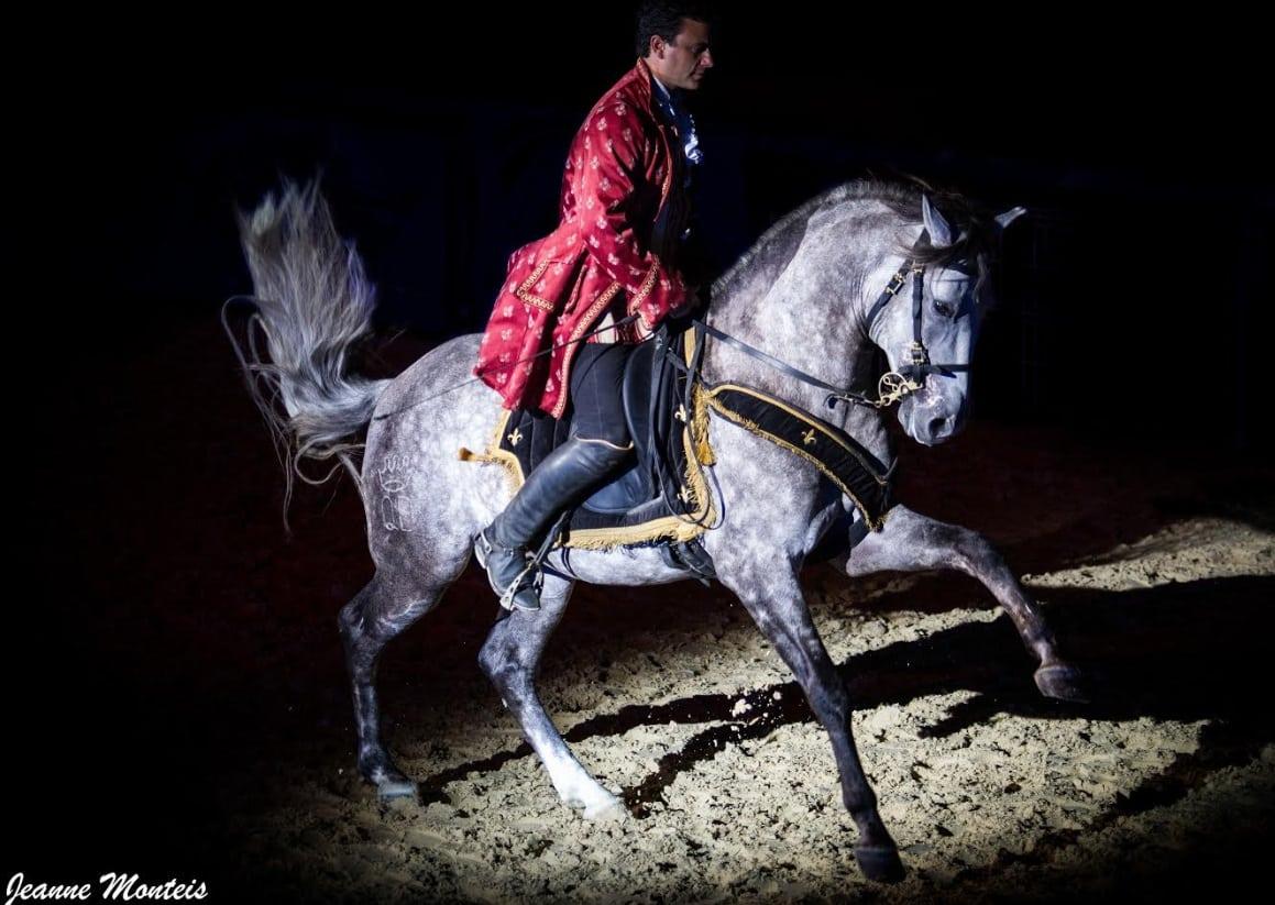 Le salon cheval roi ce week end toulouse - Salon cheval toulouse ...